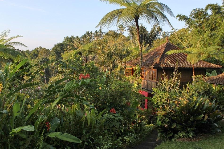 One Morning at Sarinbuana, Batukaru